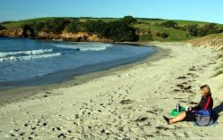 Tauwharanui beach