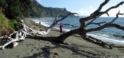Beach Goat Island