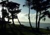 Tauwharanui park