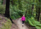 Queen Charlotte Track near Anakiwa