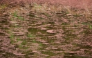 Abstract photo of the wetland pond