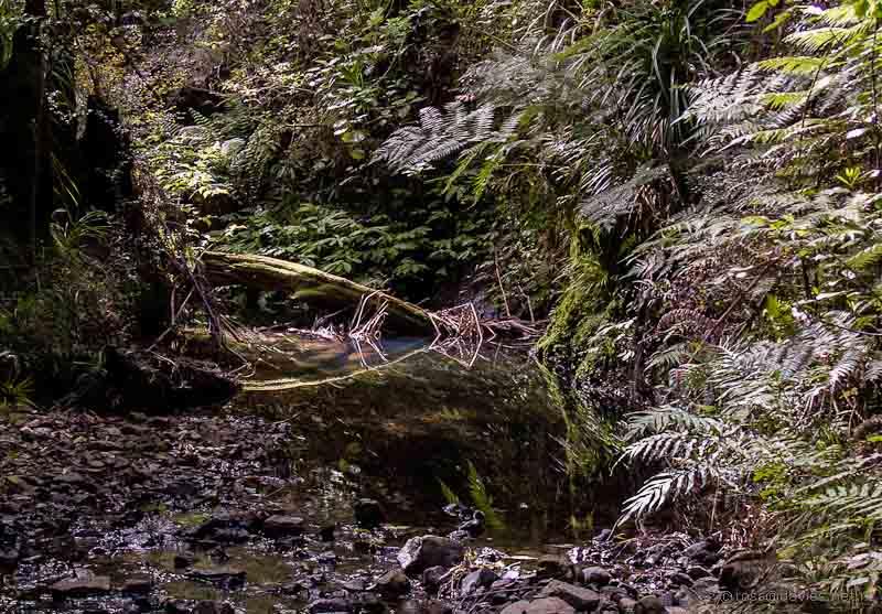 Small stream Cape Brett track