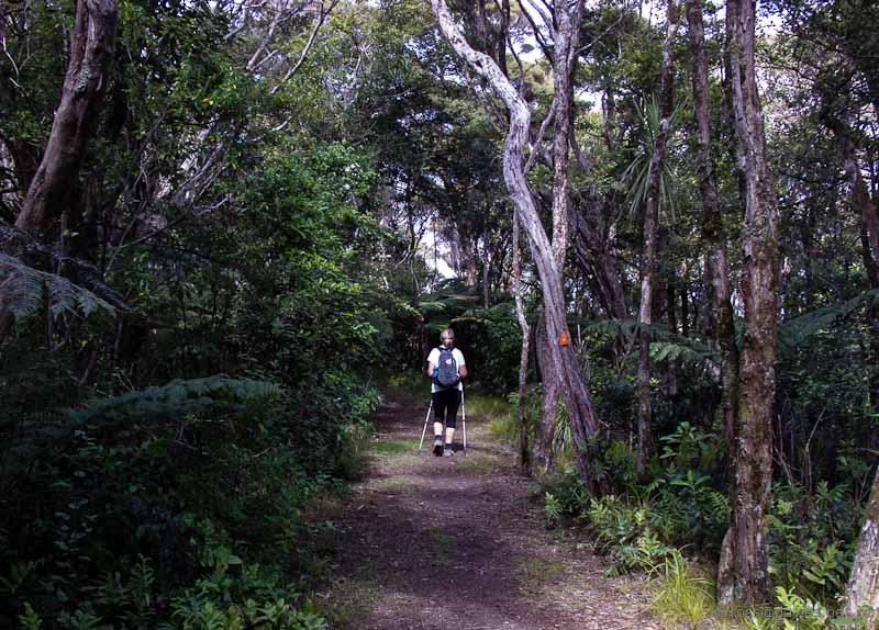 Cape Brett track