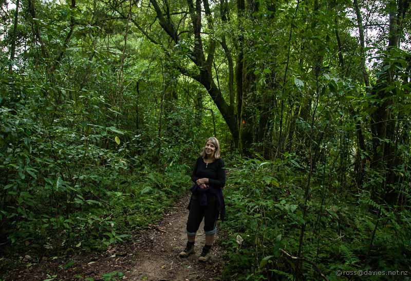 Wyn in Otanewaiuku Forest