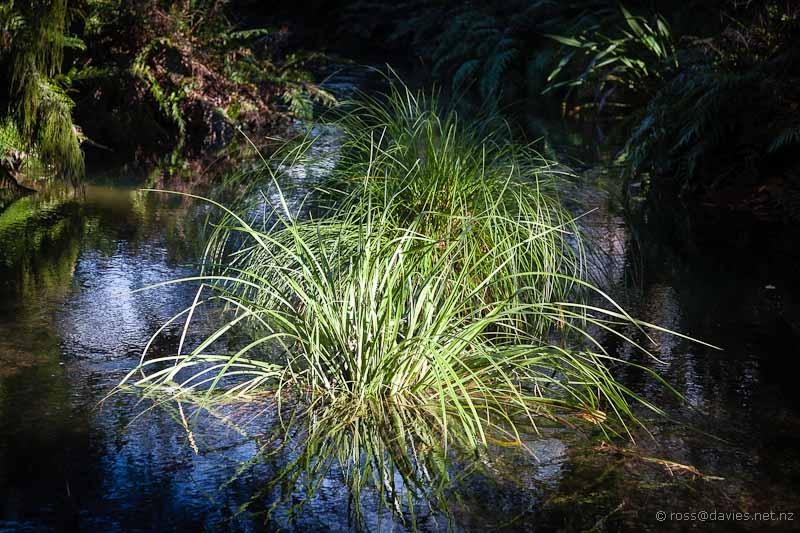Stream at Buried Village Rotorua