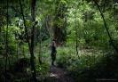 Otanewaiuku Forest