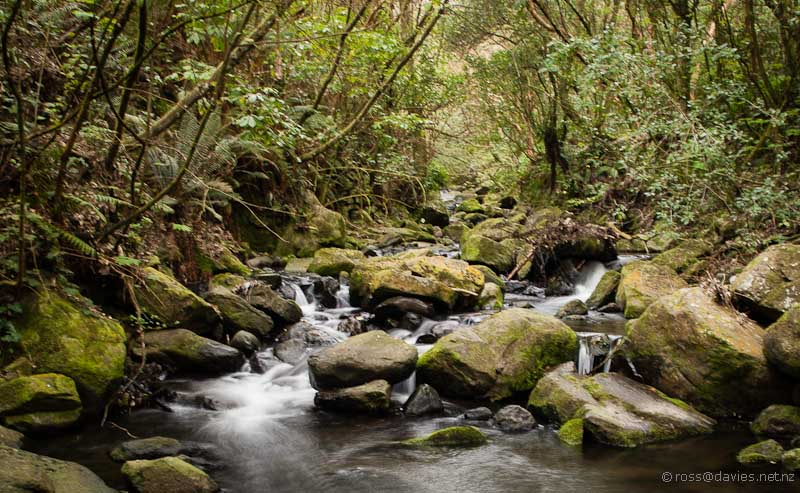 Ross Creek Dunedin