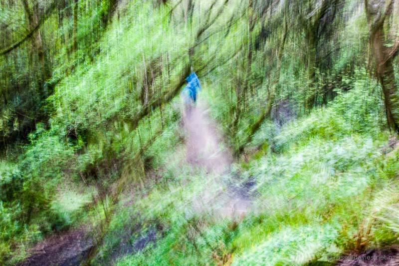 Fuzzy Forest photo