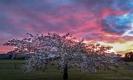 Sunrise over Flagstaff Dunedin