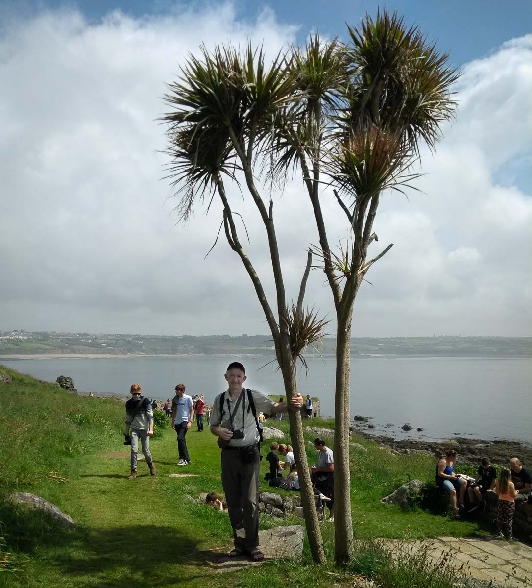 Trees at St Michael's Mount