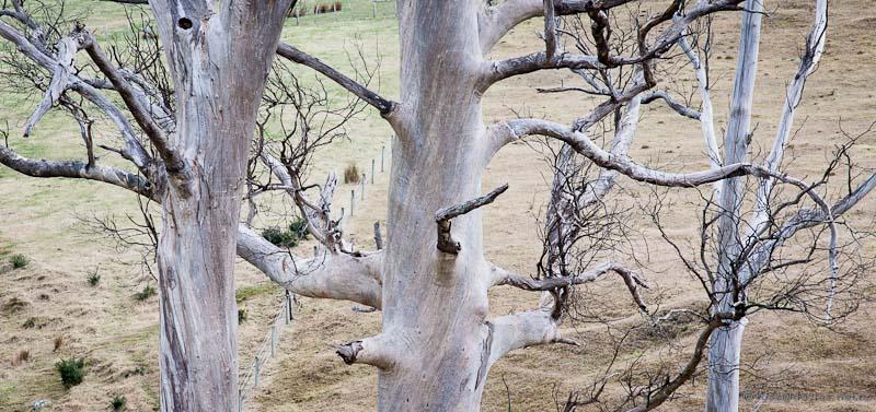 Old trees Abbotts Hill Road Dunedin