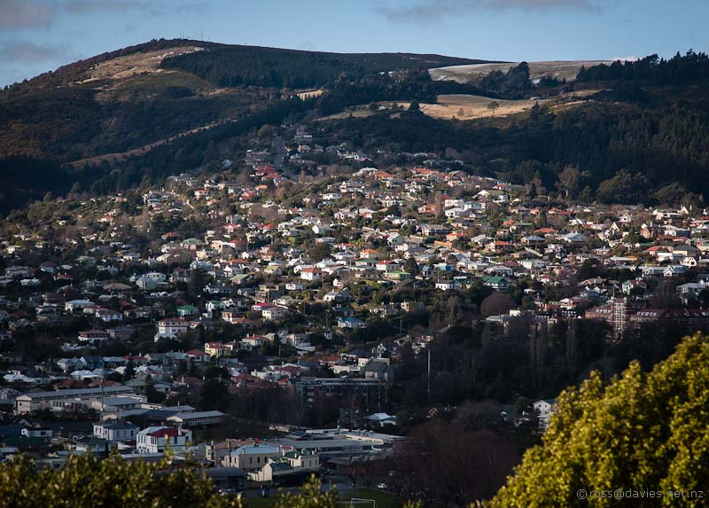 Opoho Dunedin with Signal Hill above