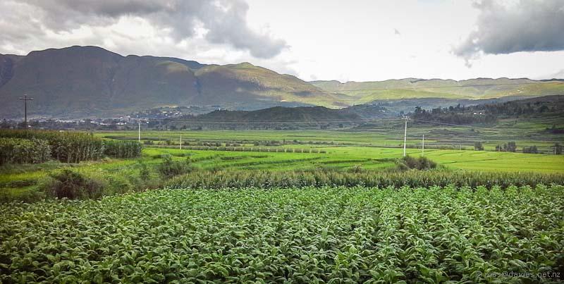 Crops growing near Shaxi