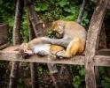 Monkeys at Shibao Mountain