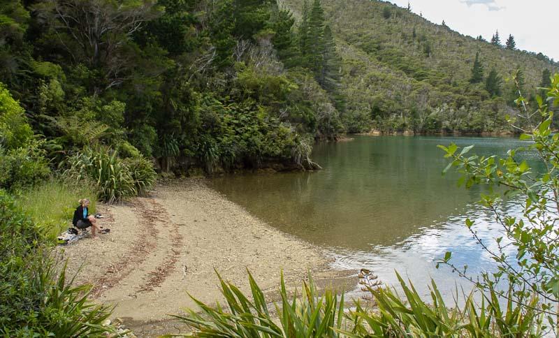 Piwakawaka Bay, Pelorous Sound