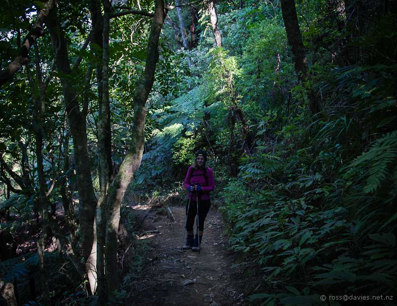 Lower part of Mt Te Aroha track