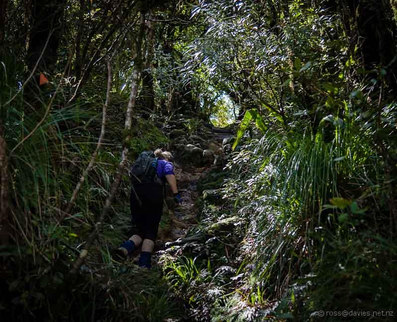 Upper part of Mt Te Aroha track