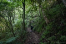 Lower part of Mt Te Aroha track