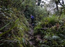 Upper part of Mt Te Aroha track