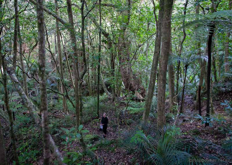 Forest track to Tane Moana