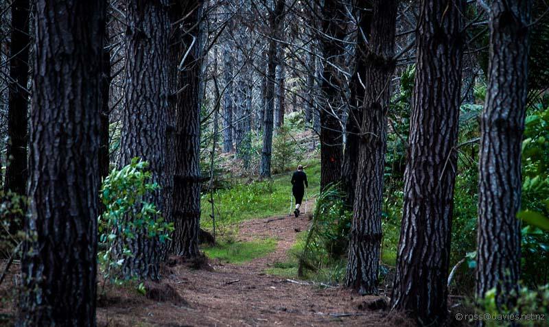 Tane Moana track - pine forest