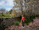 Wyn at Glenbervie; stone walls, magnolias and bags of oranges at the gate.