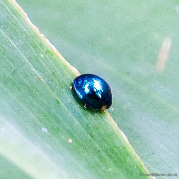 A closer look at the little ladybird