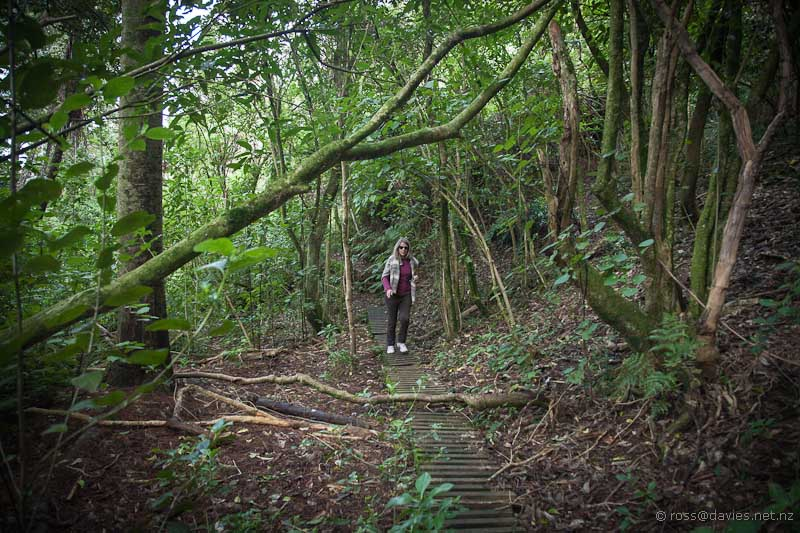 Wyn in the enchanted forest at Waihi Beach