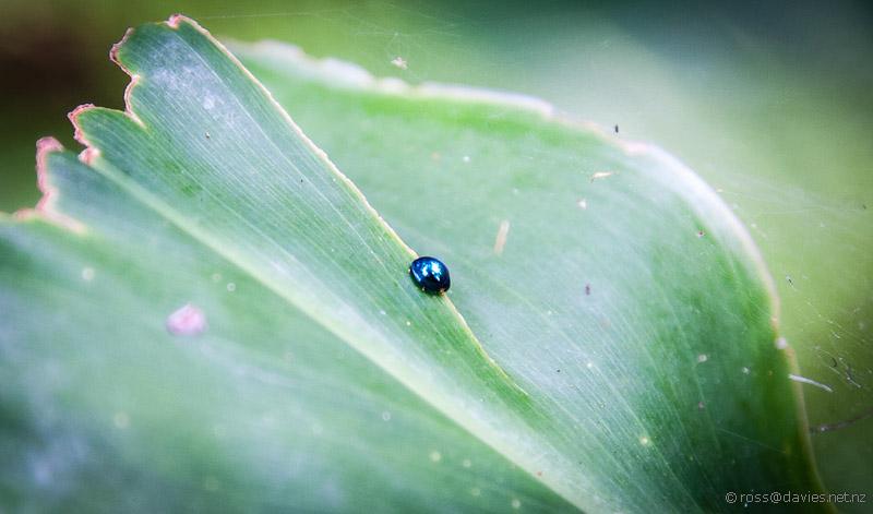 Little Ladybird on big Leaf