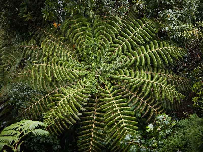 Waiohine Gorge Tararuas