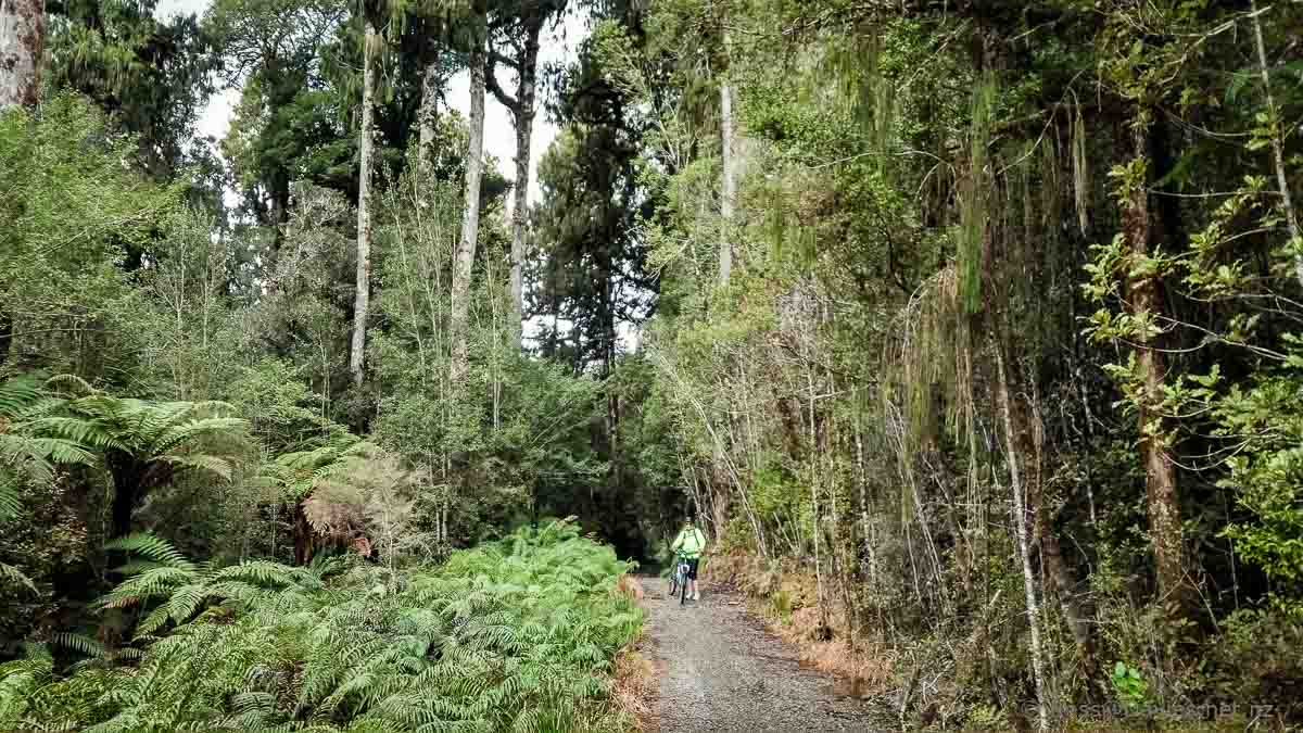Forest section towards Lake Kaniere