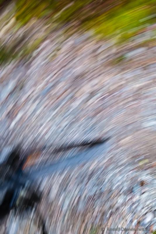 Bush trail abstract