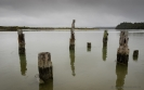 Old wharf piles at Okarito Lagoon