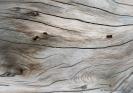 Driftwood at Okarito Beach