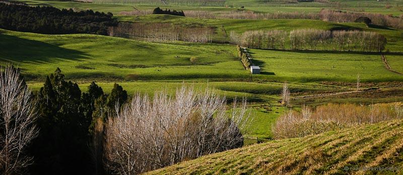 Rural view near Te Aria Point
