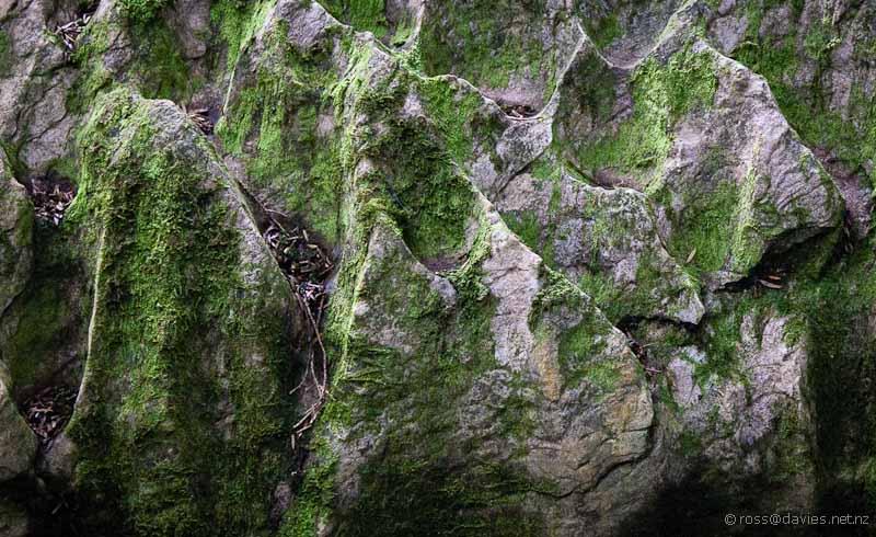 Waipu Caves Track rock patterns