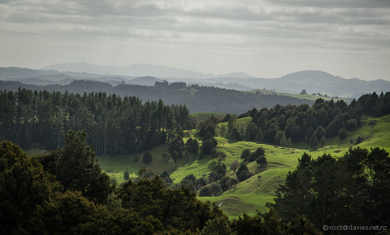 View from the top of the Waipu Caves Track