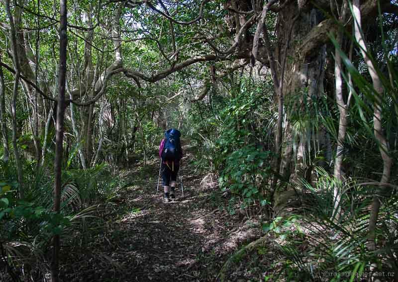 Whangaruru North Head track