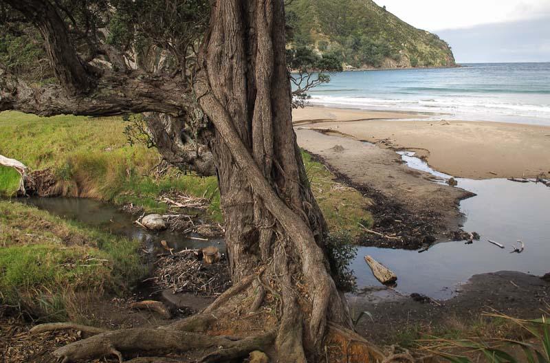 Matapaua Bay, Coromandel
