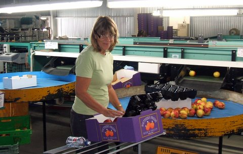 Wyn packing at the packhouse