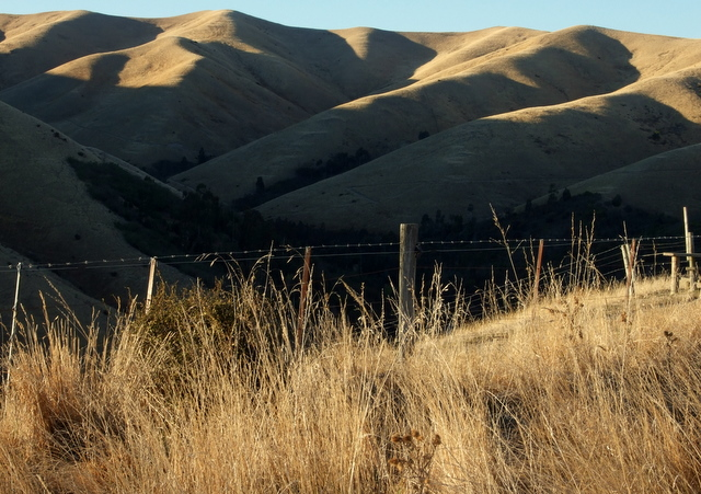 Quail Stream Wither Hills