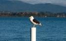 Seagull Tauranga