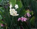 Spring flowers Rawene