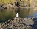 Wyn enjoying the afternoon below Cape Brett Hut