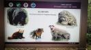 Animals of Mt Cangshan Dali