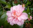 Flowers Lanhydrock Gardens