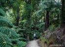 Abel Tasman Track above Goat Bay