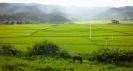 Rice fields Shaxi
