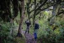 Goblin Forest Mt Taranaki