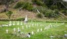 South Whananaki cemetery